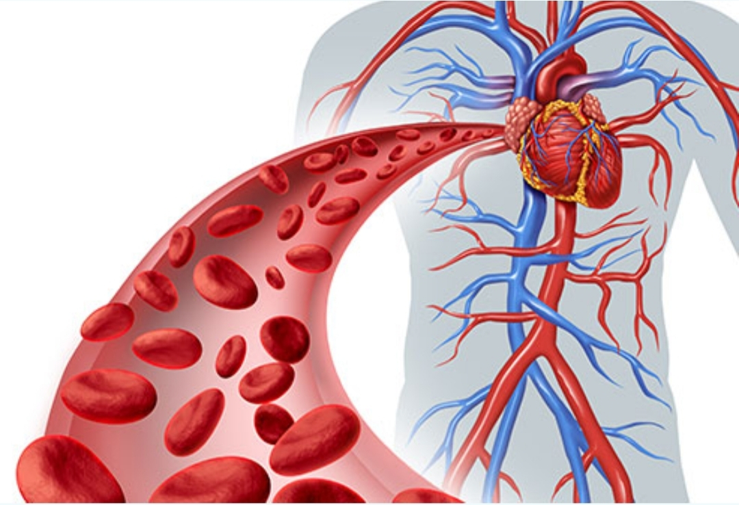 Human body blood circulatory system illustration. Poor Blood Circulation Is Dangerous to Your Health